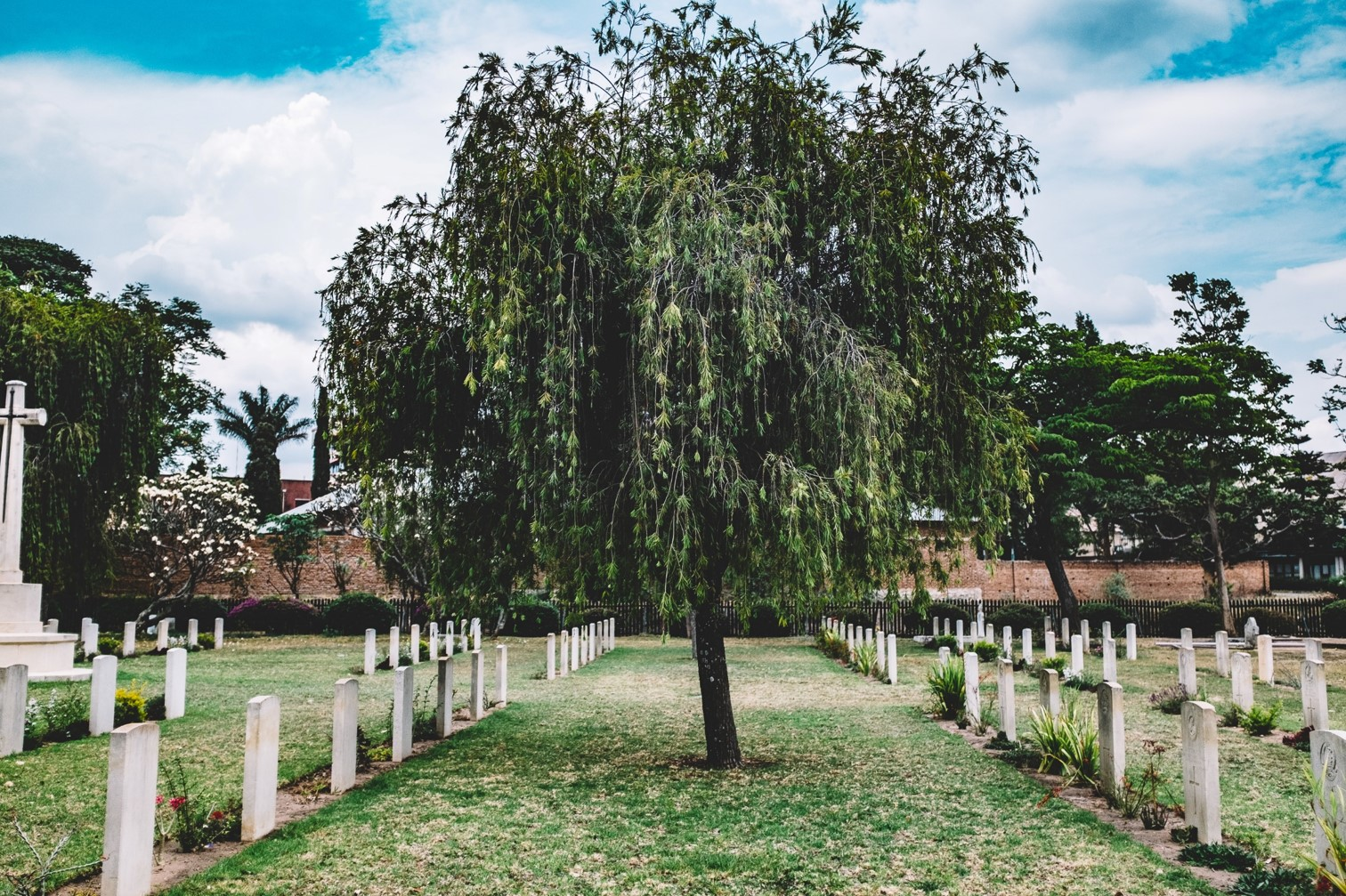 Tree in Cemetery